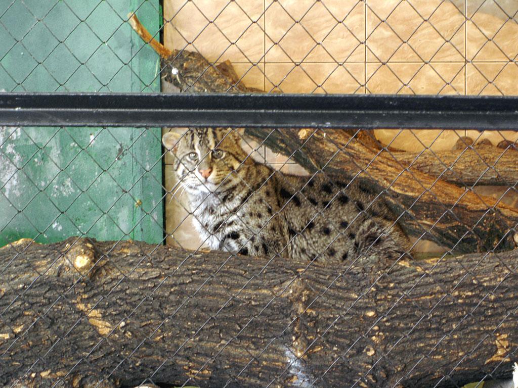 Кот в железногорске